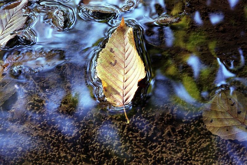 Leaves wp
